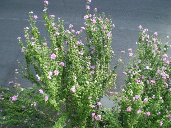 B&B AcasadiBarbara : flora cittadina