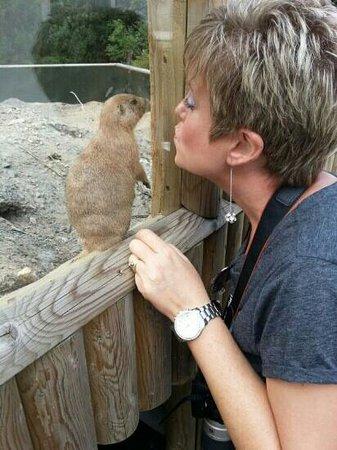 Curraghs Wildlife Park: Admiring a Prairie Dog......