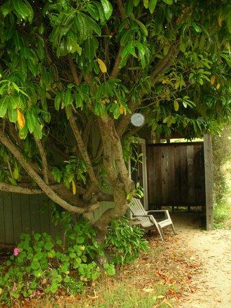 Bodega Bay Inn: tree room