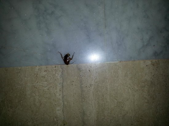 Laguna Mar: ONE of the many uninvited guests..... Lobby