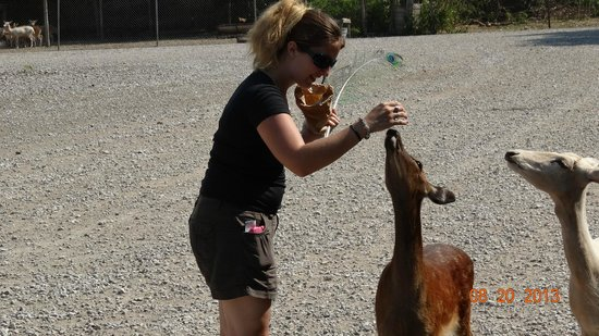 Lagoon Deer Park: They will eat right out of your hand