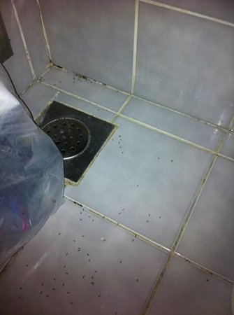 Guest House Riviera : ants!!