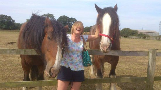 Redwings Horse Sanctuary: Prince and Gemma the Shire horses