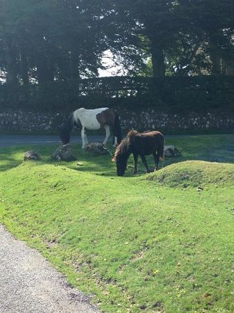 Langstone Manor Holiday Park & Cottages: Surrounded by ponies.