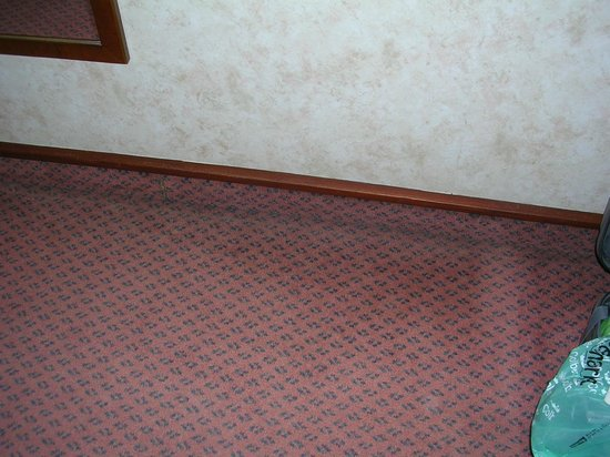 Copthorne Hotel Effingham Gatwick: carpet in room