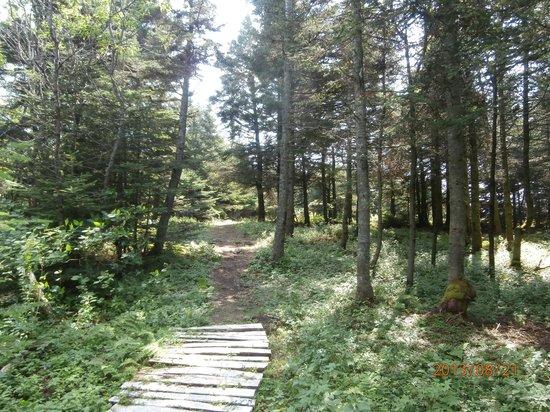 Aux Trois Couettes: Le sentier