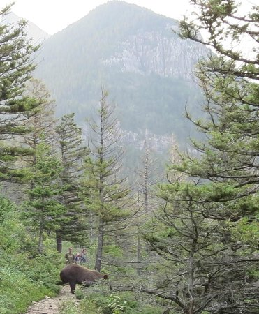 Crypt Lake Trail: See the bear crossing the trail between us & the rest of the hikers behind us