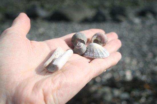 Blackhead Path: Bones and shells from the beach.