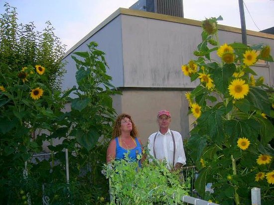 Mom's Bed & Breakfast : Tall Sunflowers