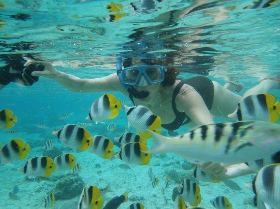 Vahine Island Resort & Spa: Poissons du lagon