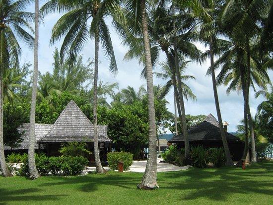 Vahine Island Resort & Spa: Cocoteraie