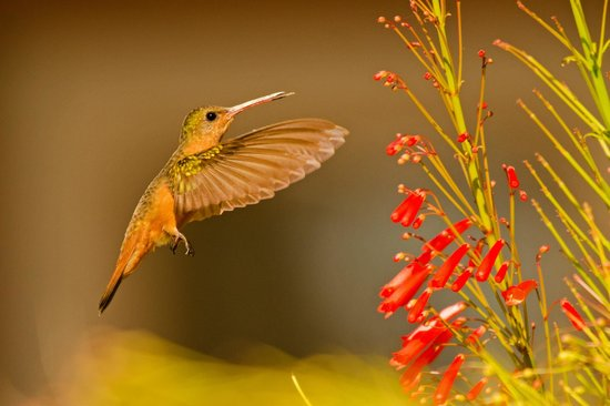 Athens Gate Beach Resort: hummingbird on grounds
