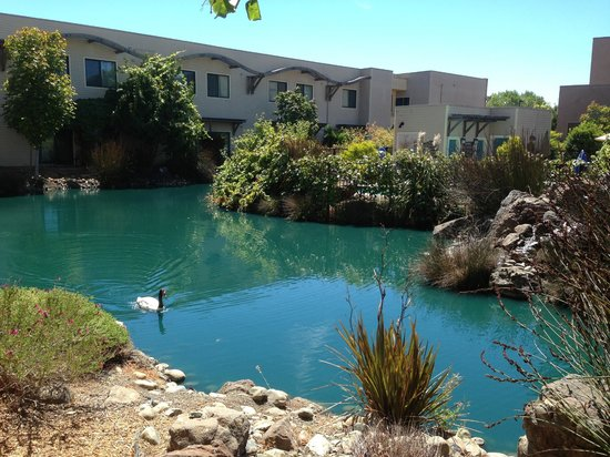 DoubleTree by Hilton Hotel & Spa Napa Valley - American Canyon : Lagoon