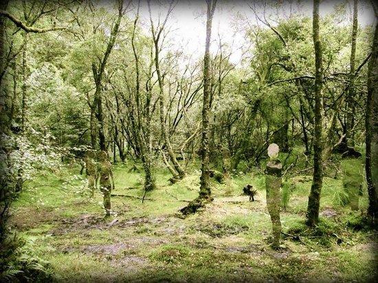 The Hairy Coo - Free Scottish Highlands Tour: Art project near David Marshall Lodge