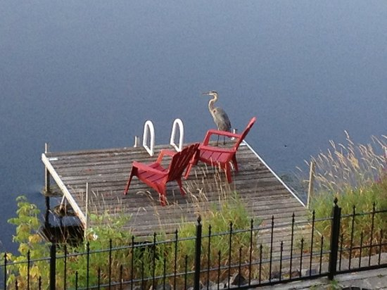 Almonte Riverside Inn: Early morning heron on the dock