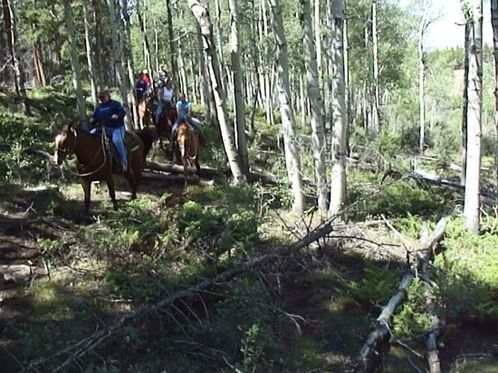 South Fork Mountain Lodge: Riding through Aspens and Pines