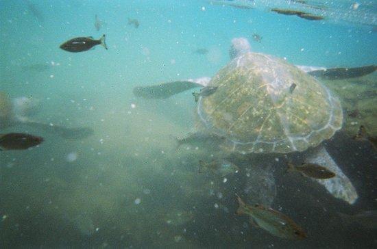 Va-i-Moana Seaside Lodge: The turtles