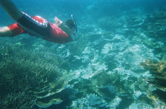 Va-i-Moana Seaside Lodge: snorkling trip with Vaimoana staff.