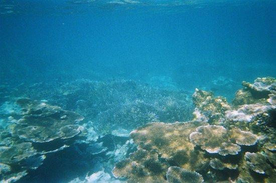 Va-i-Moana Seaside Lodge: snorkling trip, beautiful sea of coral.