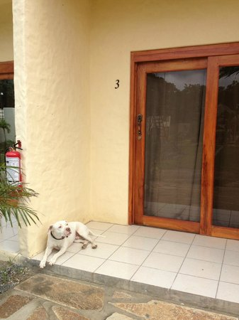 Surf Ranch Hotel & Resort: Buddy, the best guard dog.
