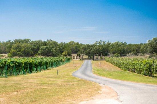 Flat Creek Estate Winery: Vineyard entrance