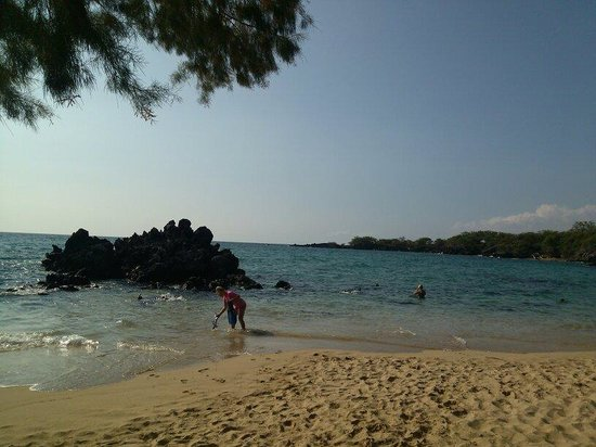 Waialea Beach: Lots of fish to see around this rock and a turtle too!