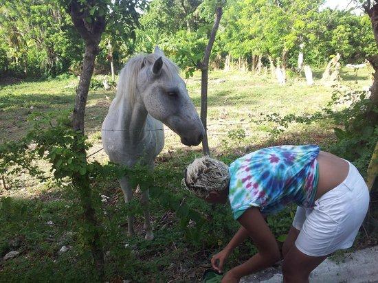 SurfBreak Cabarete: Veronika's horse