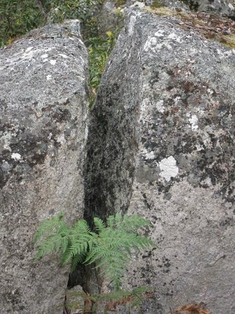 Example Of Weathering Picture Of Bald Rock National Park