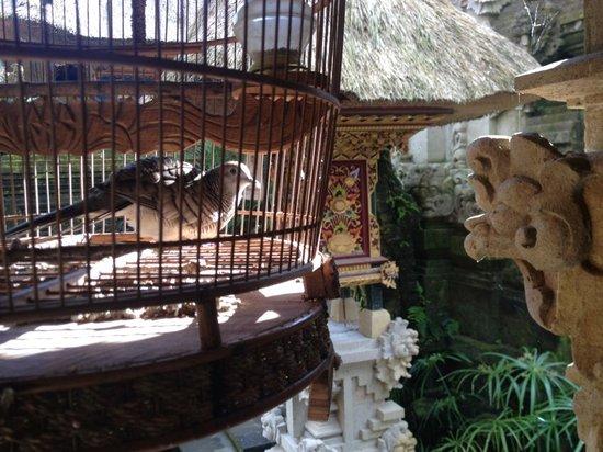 d'Umah Bali : bird cage