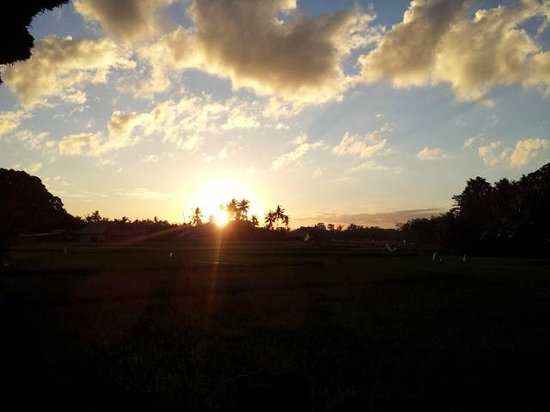 Mandala Desa: Sunset from room over the rice fields