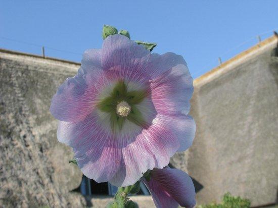Hotel Haferland: Beautiful flower