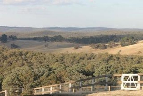 Views to Wombat State Forest from Porcupine Ridge Estate