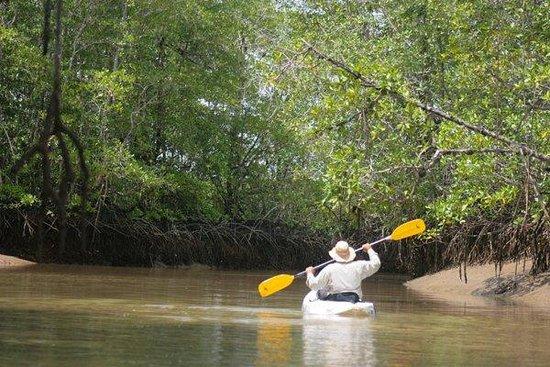 The Zancudo Lodge: Kayaks