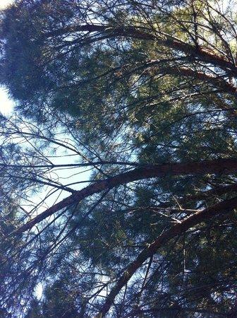 Castel Luberon: A l'ombre des pins sur la terrasse du bar