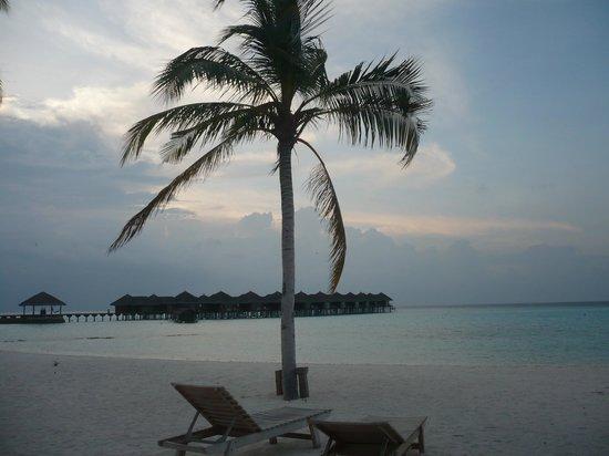 Maafushivaru: La spiaggia