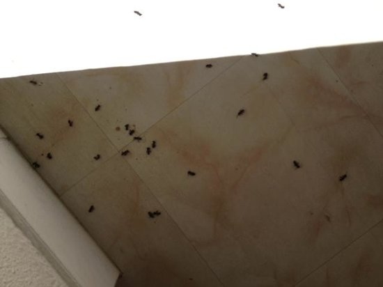Hotel Le Parasol: minimum aantal beesten in Hall