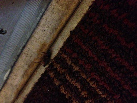 Days Inn Airport Nashville East : dead roach.