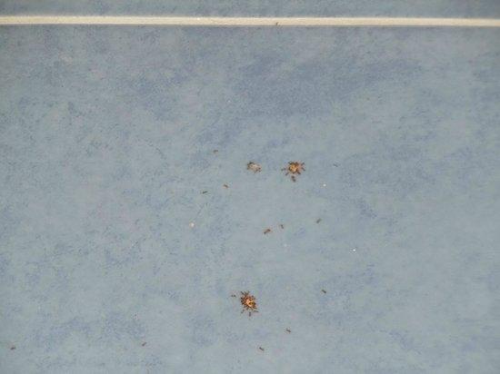 Hotel Total: Un esercito di formiche che divorano un grosso ragno accanto al comodino (ingrandimento)