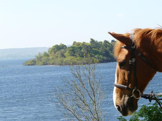 Ashford Equestrian Centre: Lough Corrib View