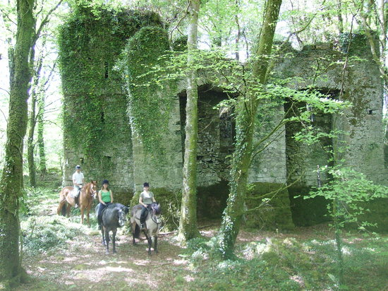 Ashford Equestrian Centre: Castle in the forest