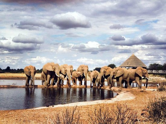 Lemodja Safaris & Tours : Tsavo East