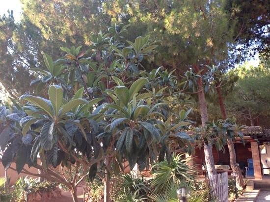 Residence La Pineta : villette immerse nel verde