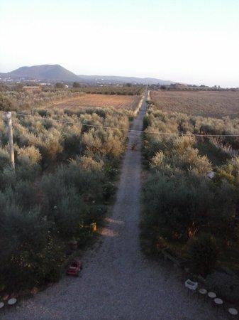 Agriturismo Le Caselle: La strada che conduce al casale