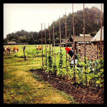 Pr Povsin: la vita di fattoria, ti mangi ciò che coltivano loro. :-)