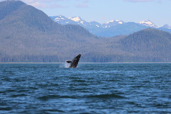 Whale Song Cruises Petersburg Alaska Picture Of Whale