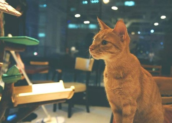 Lily Cat Cafe Myeongdong