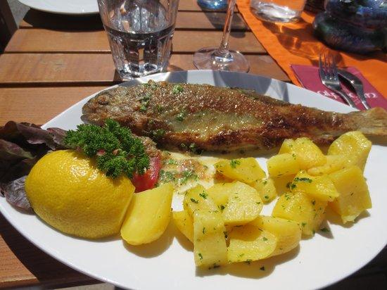 Alphorn Gasthof: Forelle