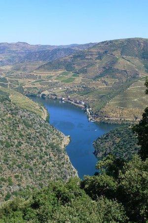 Quinta do Vale Dona Maria : Vigneti sul fiume Douro