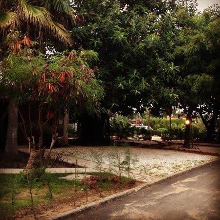 Sunugal Village-Hotel: Trees