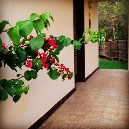 Sunugal Village-Hotel: Bouginviliers